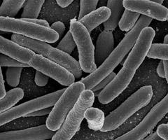 Plastics Color Corp. Expands Antimicrobial Line