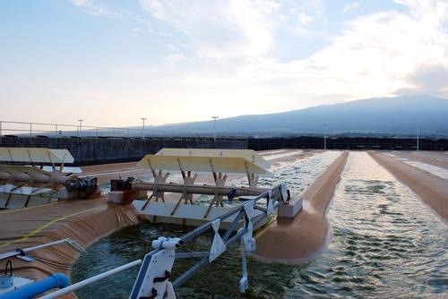 Algae-Based Biofuel Goes Commercial-Scale
