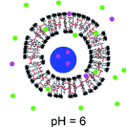 Switchable permeability for polymersomes