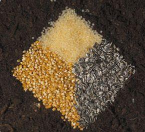 Novamont bioplastics help increase sustainability of in-flight meals
